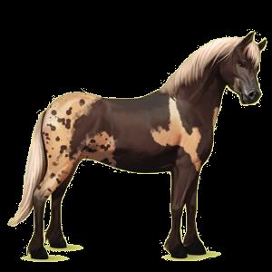 Ponny Connemara Mörk linfux