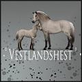 ・゚✧ vestlandshest ✧゚・