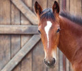 °°french horses°°