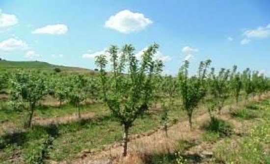 البيئة والزراعة توقعان 14 مذكرة تفاهم ضمن مشروع التحريج الوطني