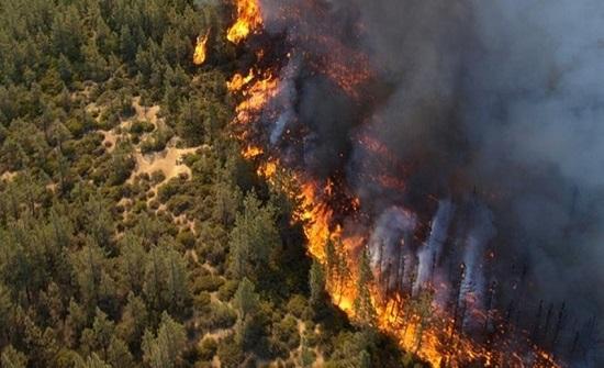 33 حريق طال المناطق الحرجية الصيف الحالي