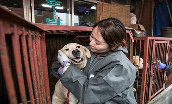 الرئيس الكوري يقترح حظر تناول لحوم الكلاب