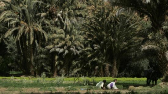 المغرب : نبتة سامة تقتل طفلين مغربيين وتسمم آخرين!