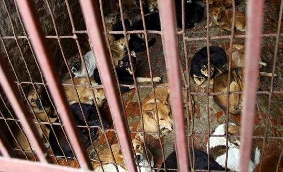 بالصور.. الصينيون يعدون أطباق الكلاب والقطط والخفافيش من جديد