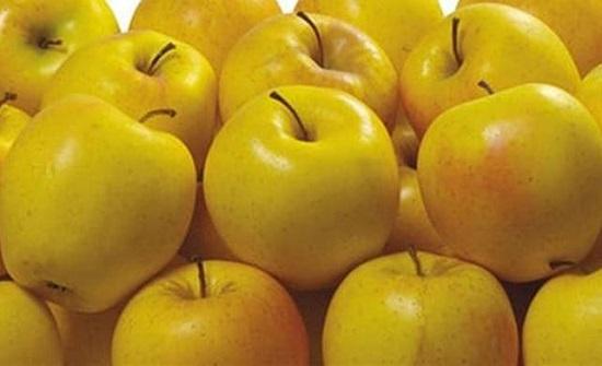 التفاح الأصفر صيدلية متكاملة من الفوائد الخارقة