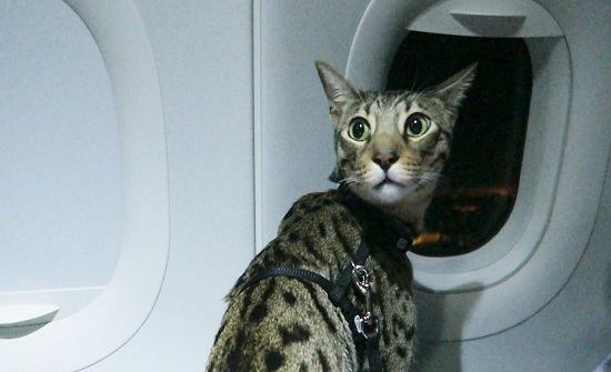 قطة تتسبب بتأخير رحلة طيران من بيروت خمسين دقيقة