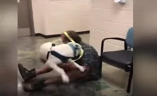 شاهد ردة فعل كلب اجتمع مع مالكه بعد فقدانه