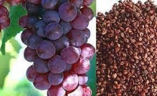 لا ترموها.. فوائد عظيمة لبذور العنب