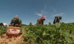 مزارعون: الوصول الى التمويل من أهم التحديات التي تعترض طريقهم