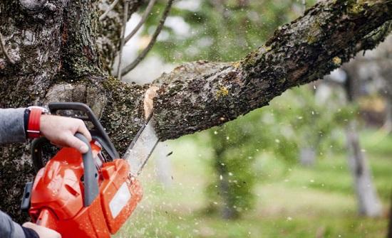 الموافقة على  إزالة 60 شجرة لإنشاء مواقف للسيارات