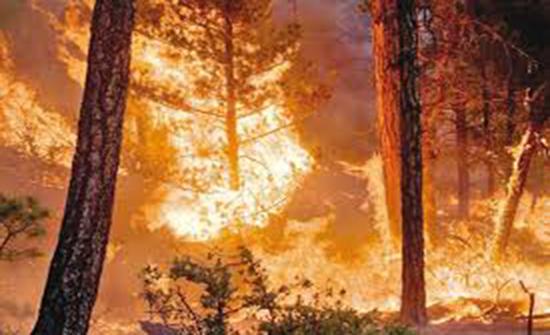 عجلون: ندوة عن مخاطر حرائق الغابات