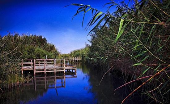 تسجيل أنواع جديدة ونادرة من الطيور في محمية الأزرق المائية