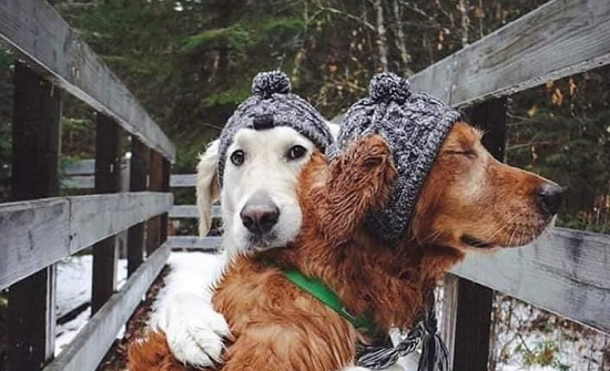 بالصور : الحيوانات تعرف الحب ايضا! ...