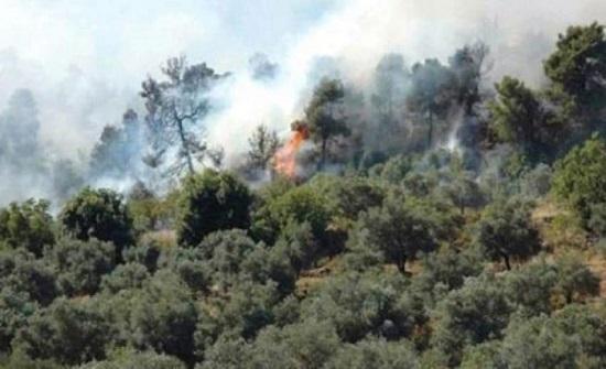 ضبط 3 اشخاص تسببوا باشعال حرائق في الشمال