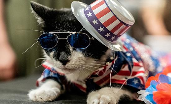 صور : عرض أزياء للقطط... قطط بأزياء فرعونية وليس هذا فقط