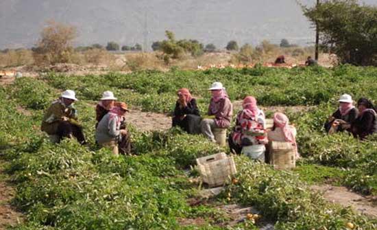 الأغوار الجنوبية: سيدات يكسرن ثقافة العيب ويحققن النجاح بمشاريعهن