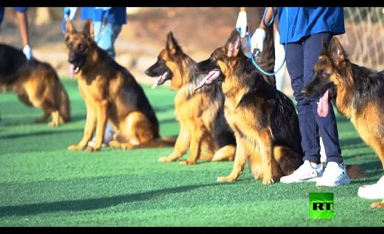 مسابقة لجمال الكلاب في السودان تثير الجدل - فيديو