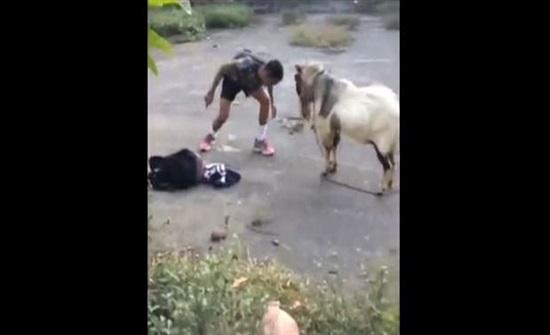 حادثةٌ طريفة.. شابٌّ جريء يُناطحُ تيساً! (فيديو)