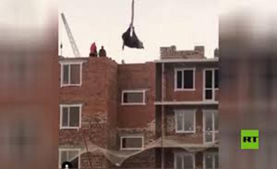 كازاخستان.. بقرة تتدلى في الهواء والشرطة تلاحق المتورطين ( فيديو )