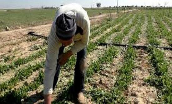 خسائر القطاع الزراعي في غزة تجاوزت المليوني دولار