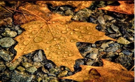 الجمعة : فرصة لتساقط الأمطار واجواء خريفية لطيفة