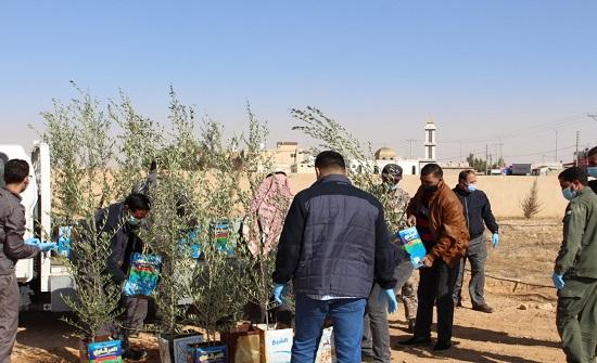 وزارة البيئة تواصل زيادة المساحات الخضراء في الكرك