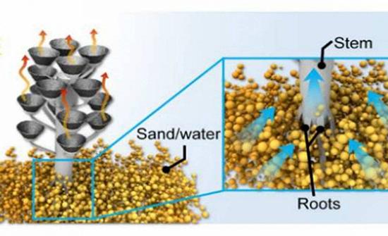 «شجرة الماء» تعمل بالطاقة الشمسية وتحول البحر إلى مياه شرب!