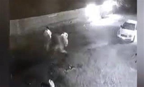 لحظة هجوم كلب ضال على 4 أشخاص وإصابتهم (فيديو)