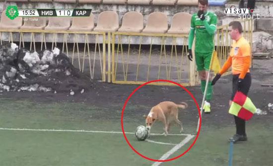 بالفيديو .. كلب يهم بتنفيذ ركلة ركنية في مباراة رسمية