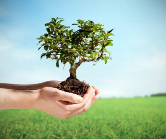 غرس 500 شجرة حرجية في بلدية دير علا