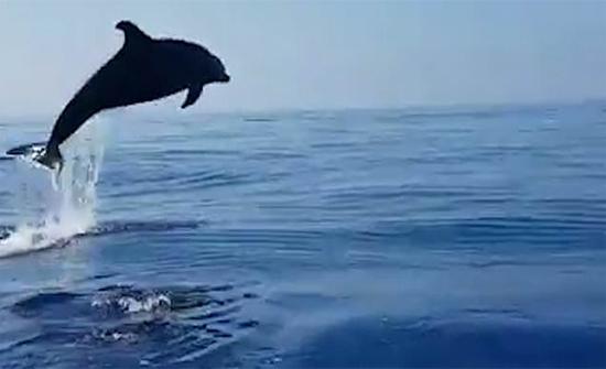 بالفيديو: دولفين يشكر الصيادين على إنقاذ طفله بطريقته الخاصة