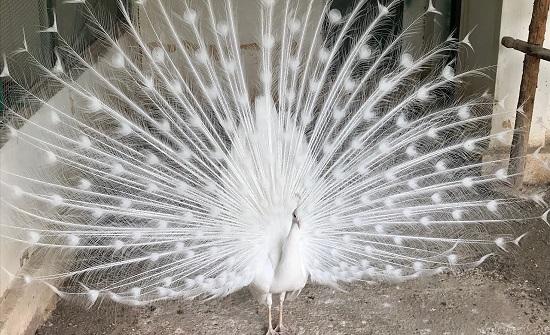 الامانة تعلن عن فتح حديقة الأمير حمزة للطيور