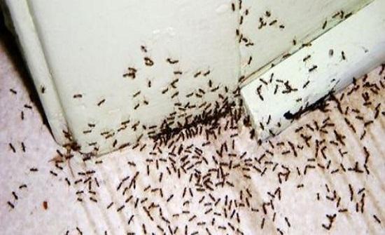 جربيها.. حلول سحرية لطرد النمل من منزلك نهائياً