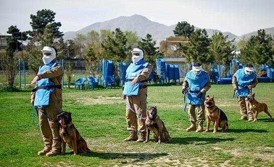 صحيفة: جندي سابق هدد مسؤولا بريطانيا لنقل حيواناته من كابول