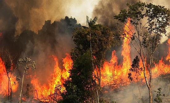محرك بحث يشهد زيادة بنسبة 1150% في التحميلات بسبب حرائق الأمازون