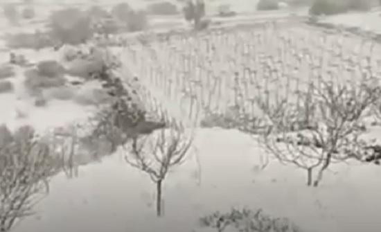 بالفيديو : تساقط غزير للامطار في عجلون
