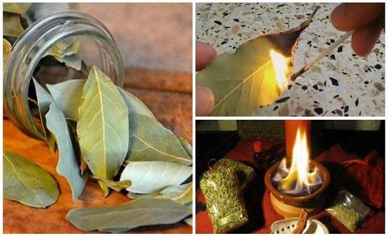 5 أسباب مذهلة تدفعك لحرق ورق الغار في المنزل
