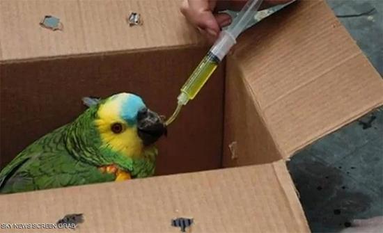 شاهد: ملجأ بوليفي يعالج حيوانات أصيبت في حرائق الأمازون
