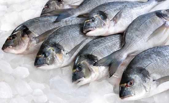 العقبة الخاصة توقف صيد الأسماك لفترة محددة وتعوض الصيادين