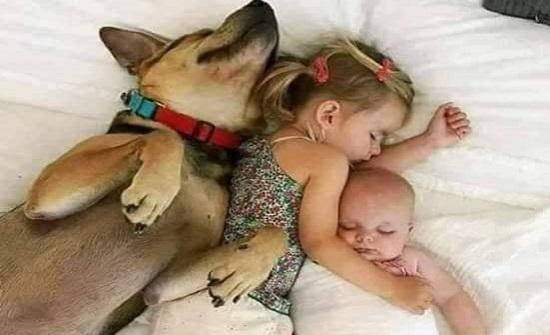 بالصور .. الحيوانات اصدقاء ايضا