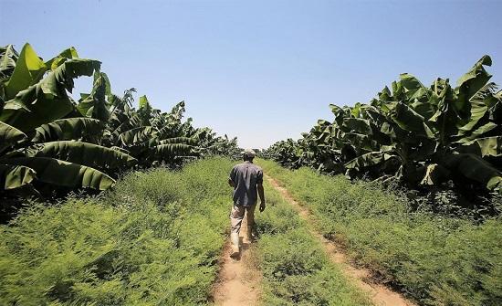 وزير الزراعة : آلية لتحرير سوق مدخلات الإنتاج