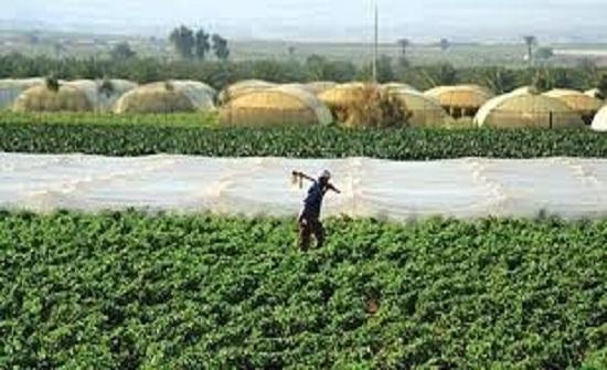 زراعة إربد: قطاع الثروة الحيوانية يتأثر حاليا بالتقلبات الجوية
