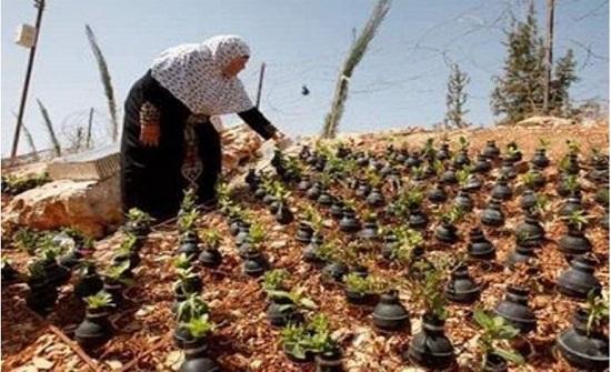 بالصور.. فلسطينية حوّلت قنابل إسرائيل لمزرعة من الورود