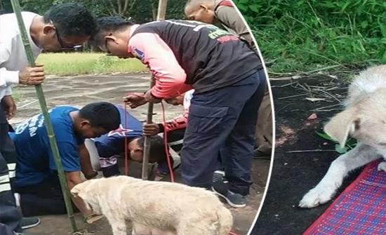 شاهد: كلبة تستنجد بالبشر لإنقاذ صغارها.. ونداؤها يلبى