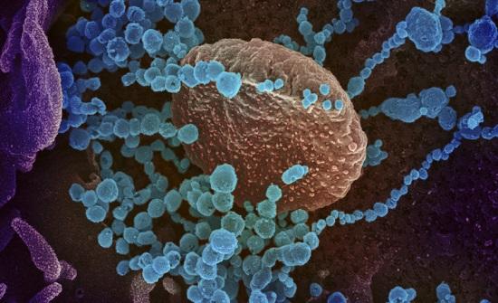 5 اصابات جديدة بفيروس كورونا في الأردن