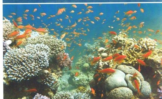 ورشة تناقش تصنيف محمية العقبة البحرية وخطتها