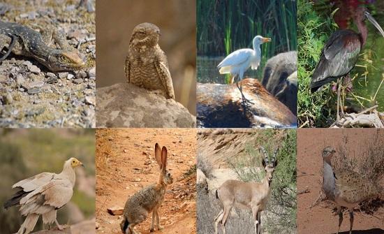 حماية التنوع الحيوي وتحديات التغير المناخي