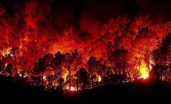 السودان : سلسلة حرائق تقضي على أكثر من 2000 شجرة نخيل