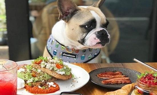 الصين تفتتح أول مطعم للحيوانات الأليفة