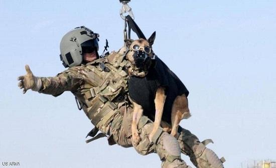 """""""الكلاب الأميركية"""" في كابل.. البنتاغون يكشف الحقيقة"""